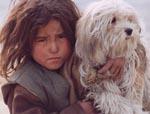 Stray Dogs (Piccoli ladri)